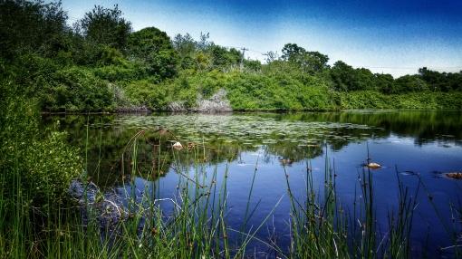 A Block Island Pond