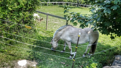 A Horse on Block Island