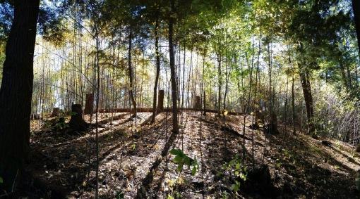 Arnold Arboretum Sun Thru Trees