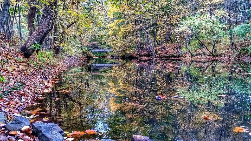 Blackstone River Reflection Leaves