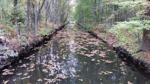 Blackstone River Reflection