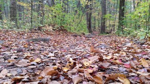 Pergatory Chasm Leaves