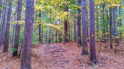 Pergatory Chasm Trail Trees